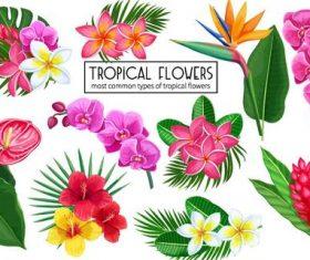 Tropical flower illustration vector material