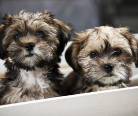 Two cute puppies Stock Photo