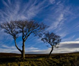 Two dead trees on the prairie Stock Photo