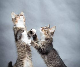 Two kittens standing up Stock Photo