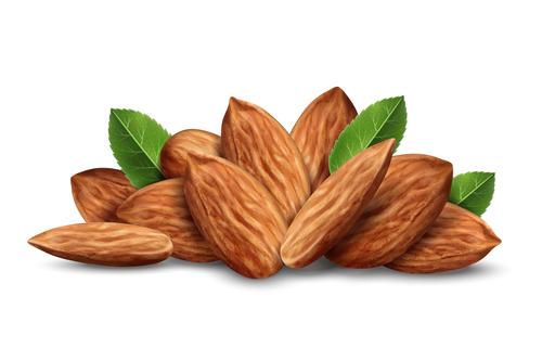 Vector almond illustration