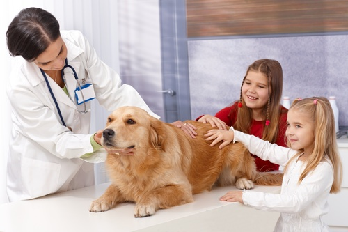 Veterinarian in pet hospital Stock Photo