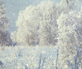 Winter snow scene Stock Photo 05