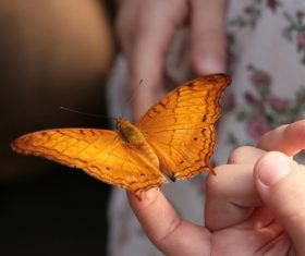 Yellow butterfly on the finger Stock Photo