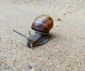 a slow crawling snail Stock Photo