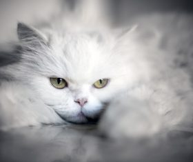 a white cat Stock Photo