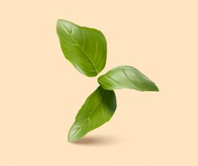 field mint leaf vector