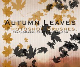 Autumn Leaves Photoshop Brushes