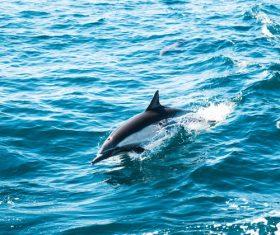 Blue sea jumping dolphin Stock Photo