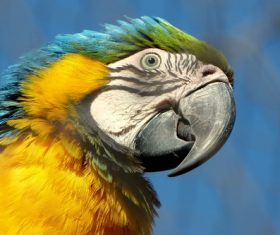 Feather bright-colored and beautiful parrot Stock Photo 01