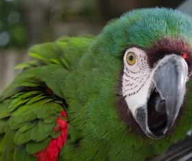 Feather bright-colored and beautiful parrot Stock Photo 02