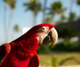 Feather bright-colored and beautiful parrot Stock Photo 04