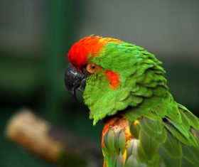 Feather bright-colored and beautiful parrot Stock Photo 06