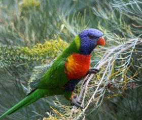 Feather bright-colored and beautiful parrot Stock Photo 08