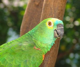 Feather bright-colored and beautiful parrot Stock Photo 11