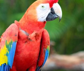 Feather bright-colored and beautiful parrot Stock Photo 12