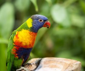 Feather bright-colored and beautiful parrot Stock Photo 13
