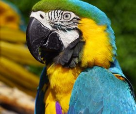 Feather bright-colored and beautiful parrot Stock Photo 14