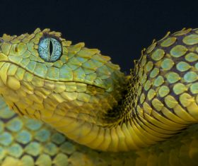 Grass snake Stock Photo 08
