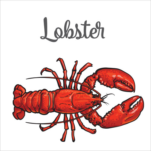 Hand drawn lobster vectors background