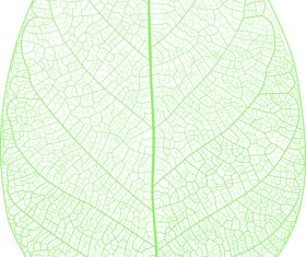 Leaf background design vector