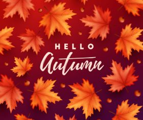 Maple leaves with red autumn background vector 04