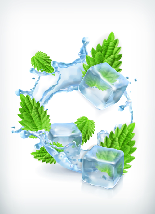 Mint with ice cubes and water splash vector