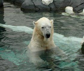 Polar bear in the aquarium Stock Photo 04