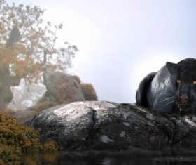Rare wild black leopard Stock Photo 06