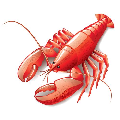 Shiny lobster illustration vectors material