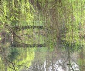 Stock Photo Weeping willow by the river 02