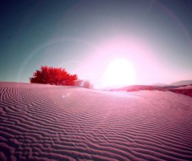 Sunny natural scenery in the desert Stock Photo 01