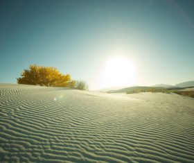 Sunny natural scenery in the desert Stock Photo 03