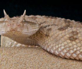 Viper snake Stock Photo 04