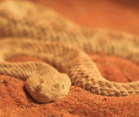 Viper snake Stock Photo 05
