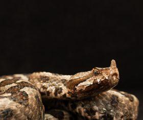 Viper snake Stock Photo 06