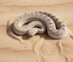 Viper snake Stock Photo 11