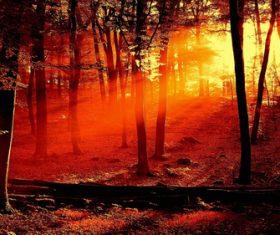 Warm forest sunshine Stock Photo 02