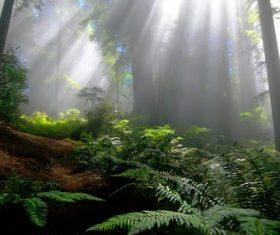 Warm forest sunshine Stock Photo 03