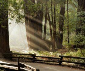 Warm forest sunshine Stock Photo 04