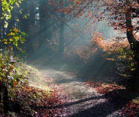 Warm forest sunshine Stock Photo 05