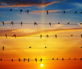 a group of swallows standing on the wire Stock Photo