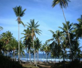 a small piece of coconut grove Stock Photo 02