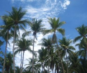 a small piece of coconut grove Stock Photo 04