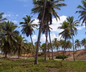 a small piece of coconut grove Stock Photo 06
