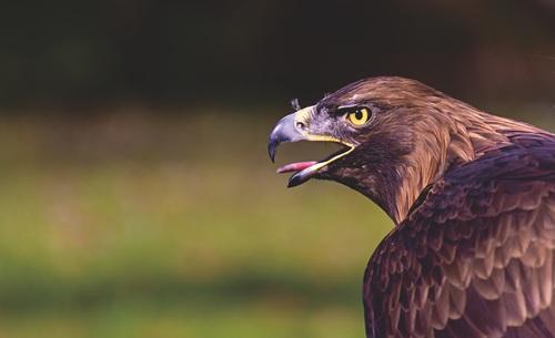 birds of prey Stock Phot