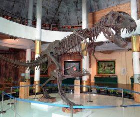 dinosaur fossil Stock Photo 01