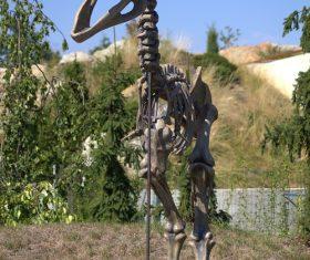 dinosaur fossil Stock Photo 03