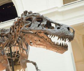 dinosaur fossil Stock Photo 04