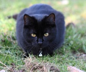 A black cat on the grass Stock Photo